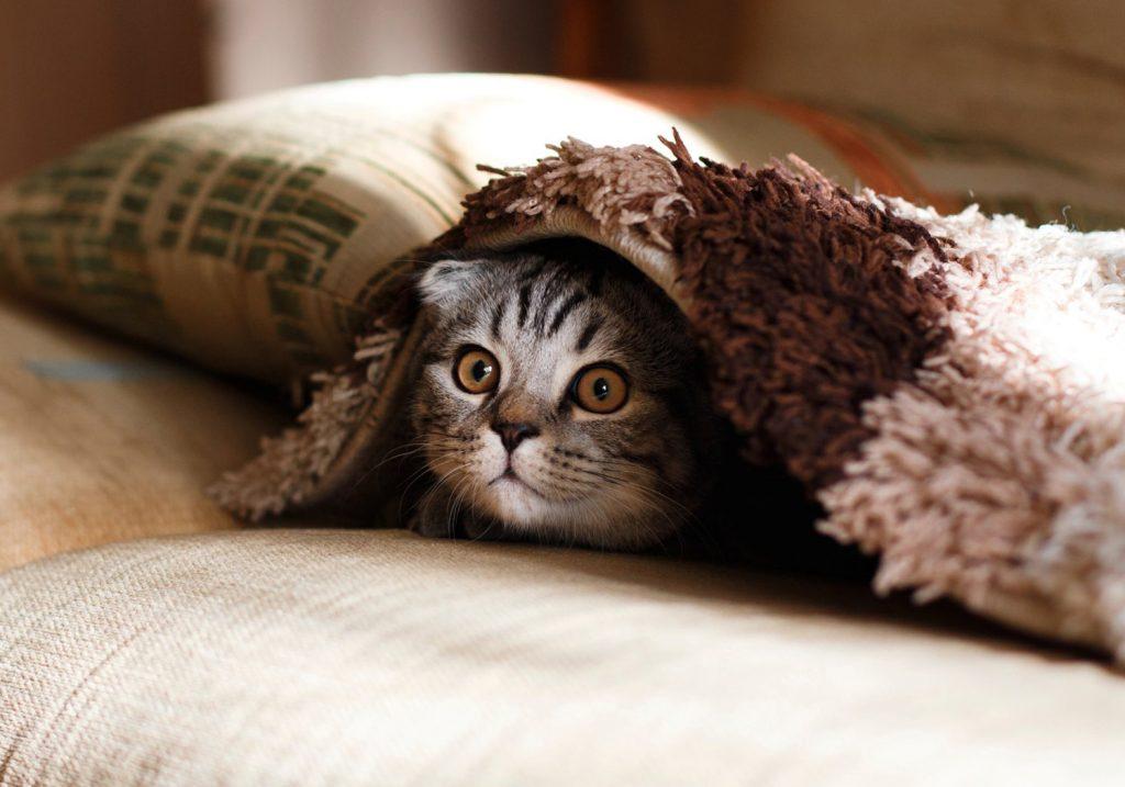 comportement-du-chaton
