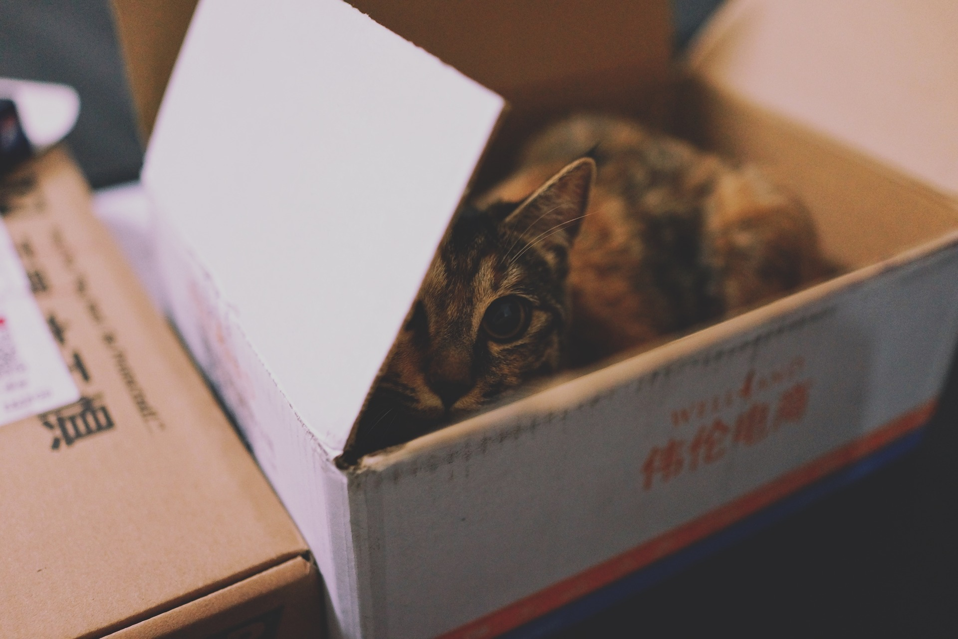 Chat caché dans dans un carton de déménagement