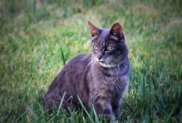Comment habituer son chaton à sortir sans s'éloigner ou s'échapper ?
